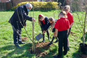 Tree Planting at Dorking Cres Clacton with Cann Hall Years 6 class